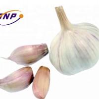 Factory garlic allicin extract powder garlic granular