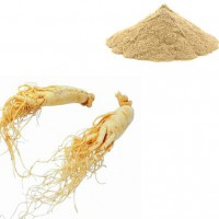Healthy Supplements Ginseng Root Extract with Panaxoside 2%-55%HPLC