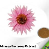 Echinacea Purpurea Extract with 1%-10% Polyphenol for Antivirus