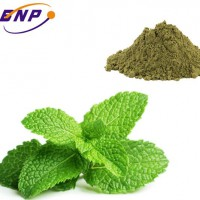 Supply high quality Peppermint Extract Powder