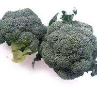 Wholesale origin Chinese fresh broccoli