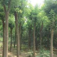 Guohuai